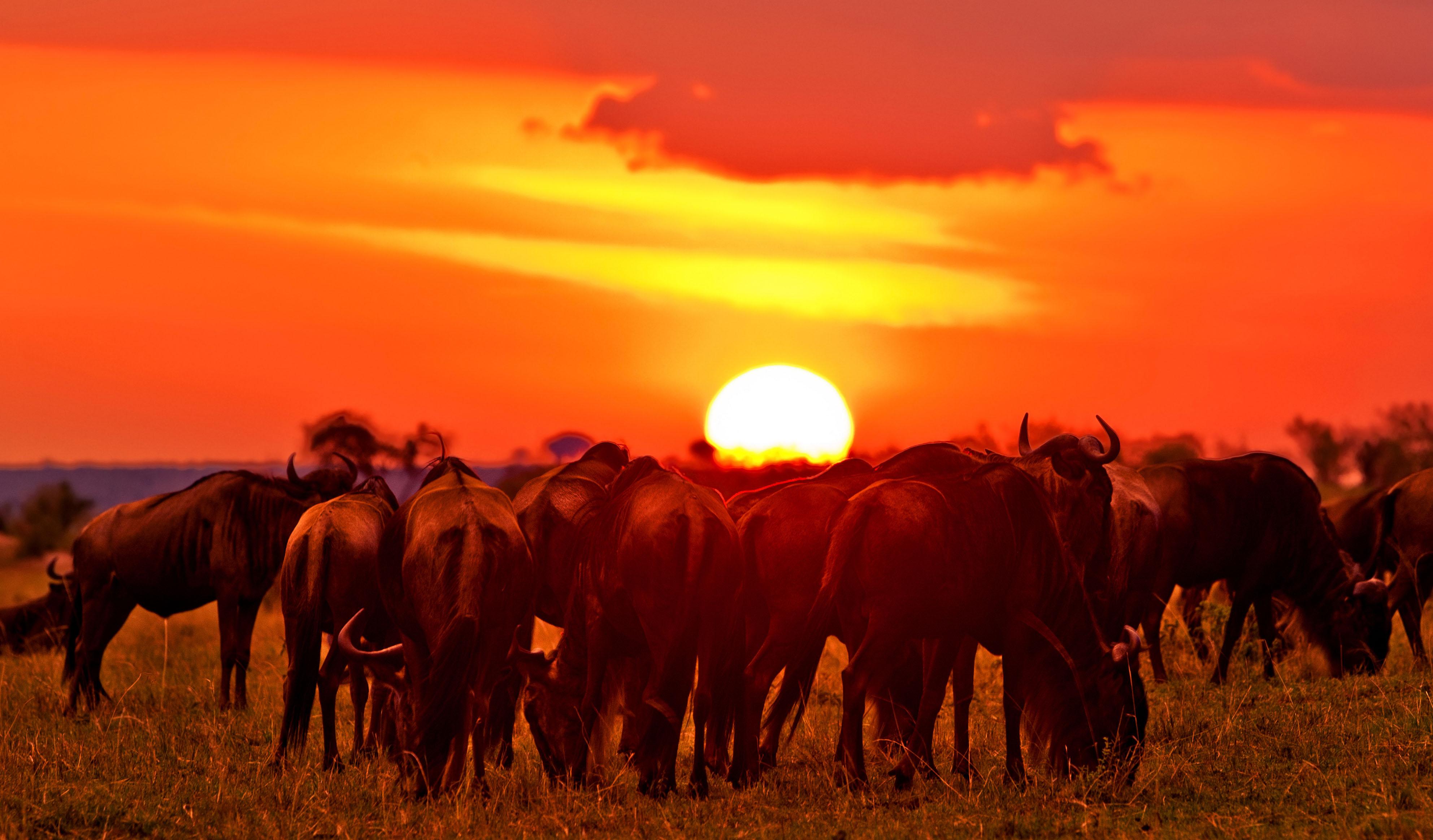 Adventure in Africa